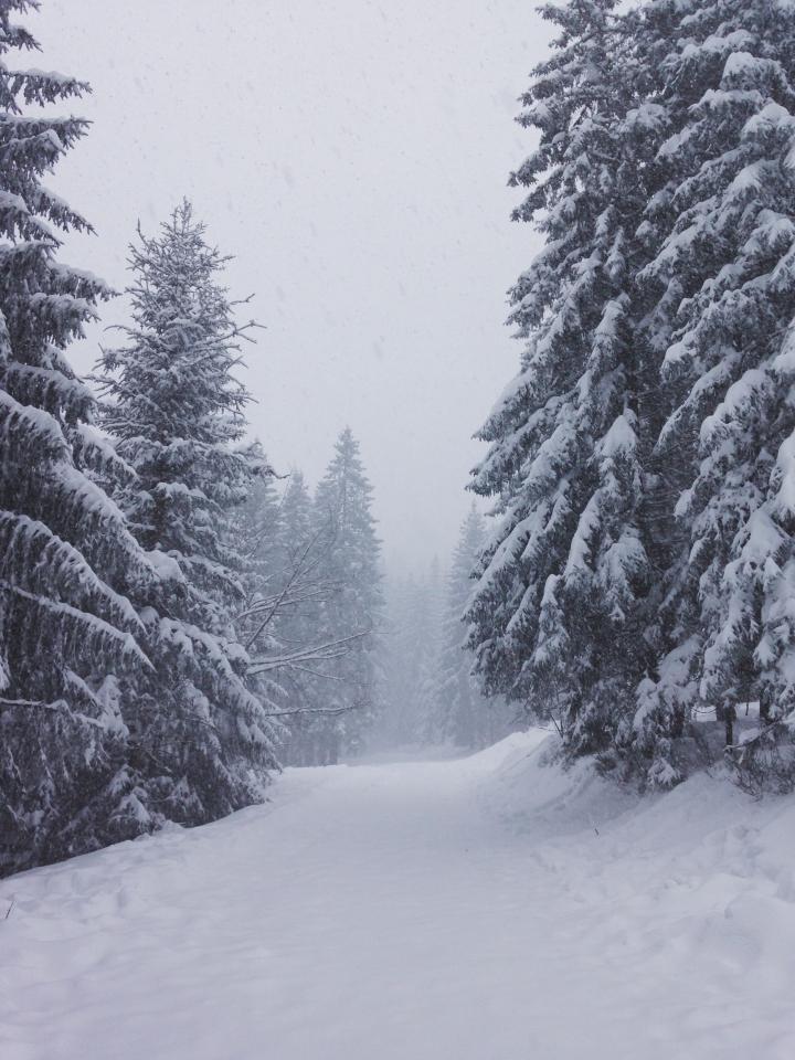 La forêt noire … ou blanche